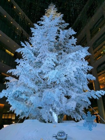 KITTEホワイトツリー(2)